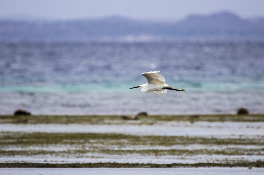 krit, grcka, ostrvo, ptice, posmatranje,