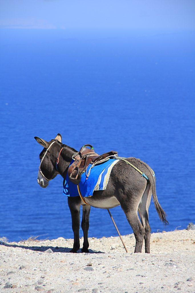 santorini, grčka, ostrvo, magarac, jahanje